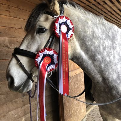 Horse with online dressage championships rosettes