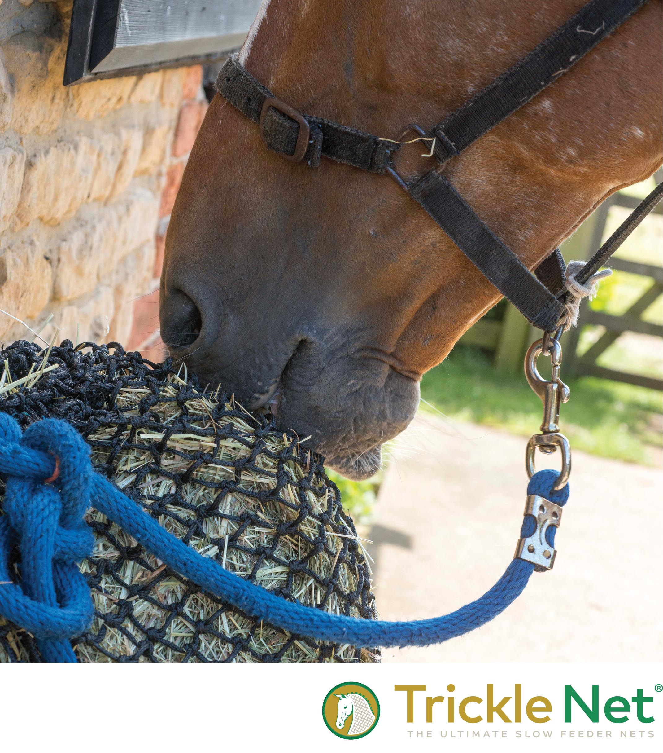 Horse with Trickle Net